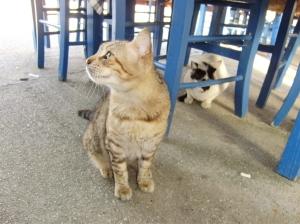 Grekiska katter