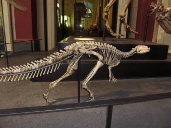 Dinosaurieskelett i Berlins naturhistoriska museum. Mitt foto.